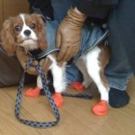 Chloe in booties