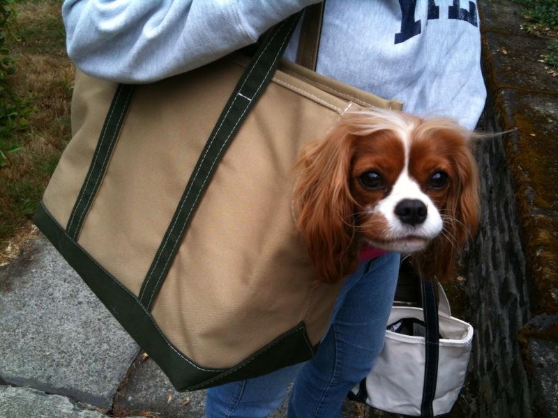 chole purses - Wagwear\u0026#39;s Boat Canvas Carrier for a small dog ? Dog Jaunt