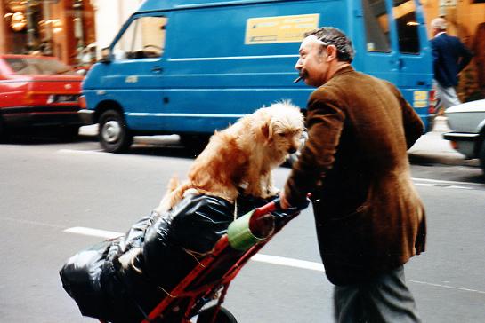 """A Paris """"dog taxi"""""""