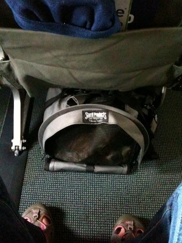 Which Seat Best In Cabin Dog Delta