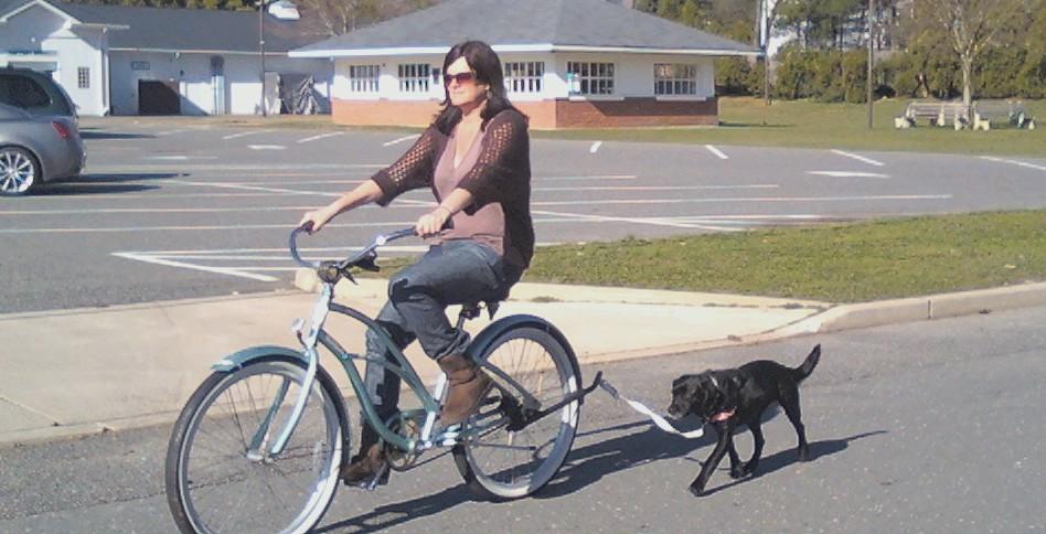 Springer Dog Bike Leash Reviews