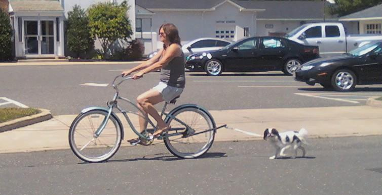 Teaching Your Small Dog To Use A Bike Attachment Dog Jaunt