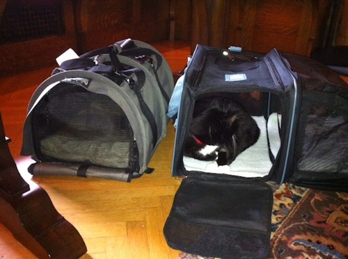 Bon This Time, Fran The Cat Is Inside The Smart Space Carrier. As I Write This  Post, Our Cat Charlie Is In Residence. Itu0027s Been A Popular Hangout From The  ...