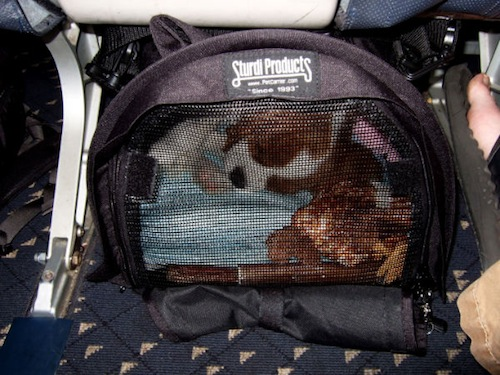 Reader s report flying with an in cabin dog on an alaska for Can service dogs fly in cabin