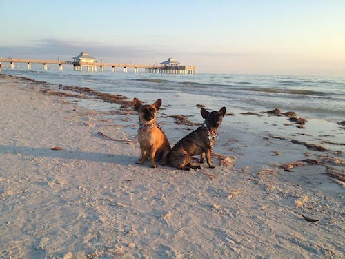 Mia and Raisin on the beach in Florida