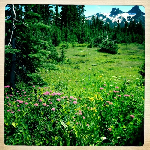 A small meadow with wildflowers just below the inn. A glimpse of the gaunt Tatoosh Range in the background.