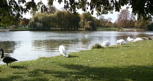 Swans preening themselves on the île de Reuilly, one of two islands in the Lac Daumesnil — truly lovely scenery, and dogs aren't otherwise allowed on them, so biking turned out to be a brilliant choice