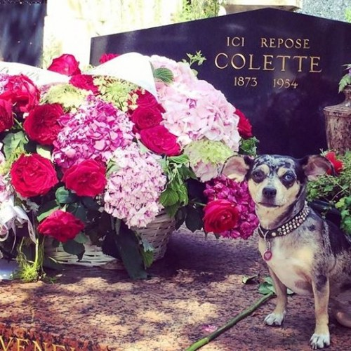 At Colette's grave in the Père Lachaise cemetery (not dog-friendly, so be cautious re-creating this shot)