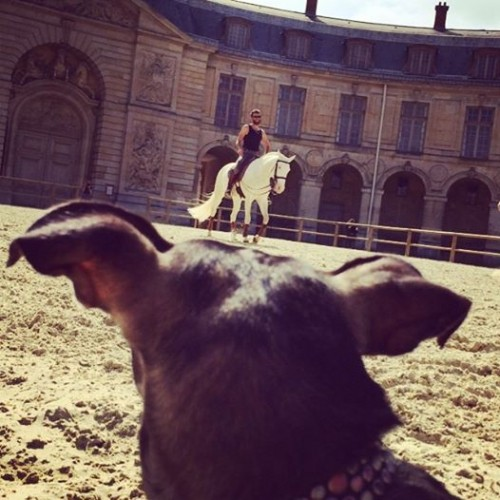 Blue-eyed pup watches blue-eyed (really!) Lusitanian horses training at Versailles' Grande Écurie