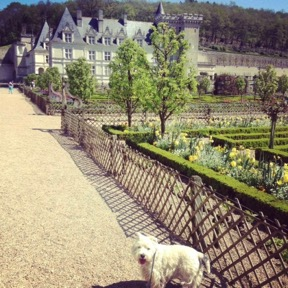 Zadig in the garden of Villandry