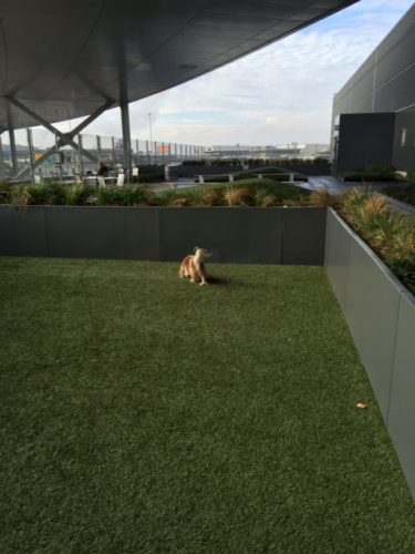 Chloe, accomplishing her goals. It's a good-sized space, as you can see, and while it's actually pretty close to the human side of the terrace, the two areas feel very separate. Nice design work, T5 persons. (That's artificial turf, by the way, which Chloe doesn't mind a bit.)