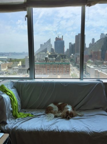 The view (north to Lincoln Center) from our second room — that's our sheet on the couch, protecting it from Chloe's fur.