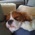Chloe in her Snoozer