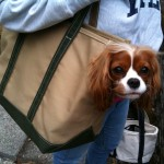Chloe in her Boat Canvas Carrier (Large)