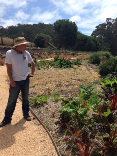 Ross, the garden manager, surveying chard. Beyond him is a future guest lounge area and an orchard — the garden is just getting started, but it's a sun trap and will thrive.