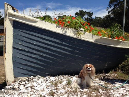 Chloe and the boat of nasturtiums