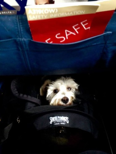 I believe this picture is from the starboard side of the plane, since it looks like the seat pocket ends at the right, and there's a hint of a right wall at the bottom. This, therefore, is a large SturdiBag (and adorable pup) in the under-seat space for window seat 2D on a Delta A-319.