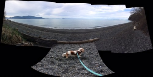 This started out as just a scenery panorama — I pushed the wrong button and added Chloe, at my feet, instead of turning off the phone.